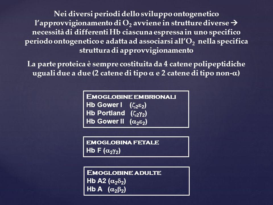 Nei diversi periodi dello sviluppo ontogenetico l'approvvigionamento di O 2 avviene in strutture diverse  necessità di differenti Hb ciascuna espress