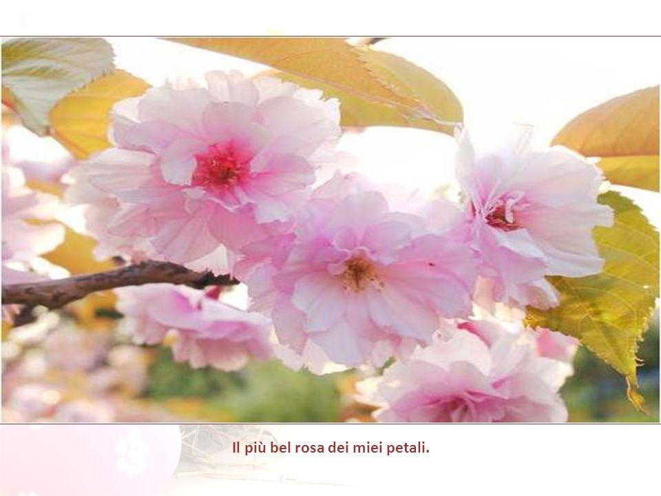 Il vento passò come una carezza sul mandorlo in fiore e chiese: Domani è Pasqua di Redenzione, che cosa offrirai tu al Signore?