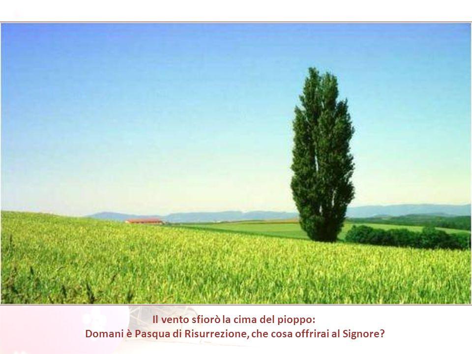 Il vento sfiorò la cima del pioppo: Domani è Pasqua di Risurrezione, che cosa offrirai al Signore?