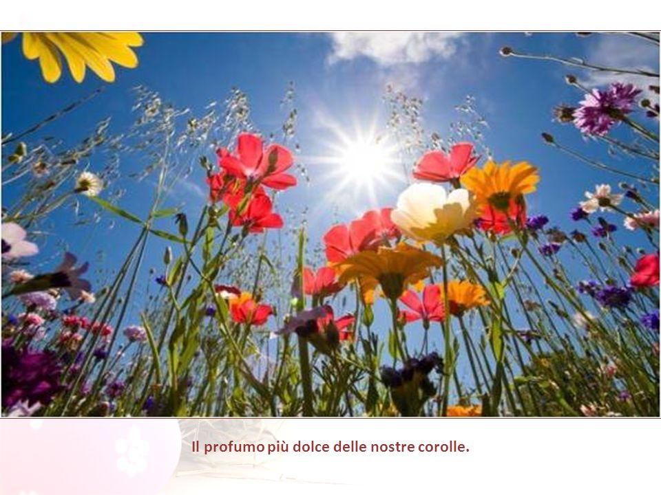 Il vento si posò sui fiori di campo e sospirò: Domani è Pasqua di Risurrezione, che cosa offrirete, voi, al Signore?