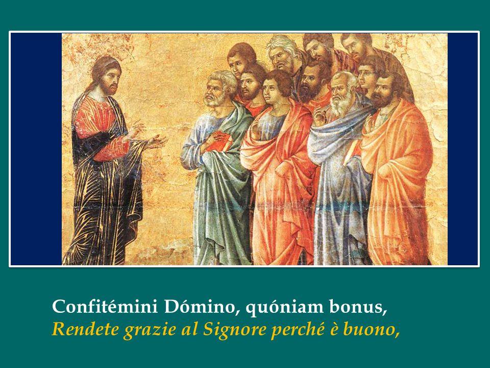 Confitémini Dómino, quóniam bonus, Rendete grazie al Signore perché è buono,