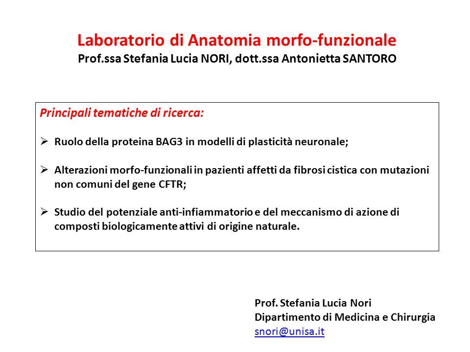 Laboratorio di Anatomia morfo-funzionale Prof.ssa Stefania Lucia NORI, dott.ssa Antonietta SANTORO Principali tematiche di ricerca:  Ruolo della prot