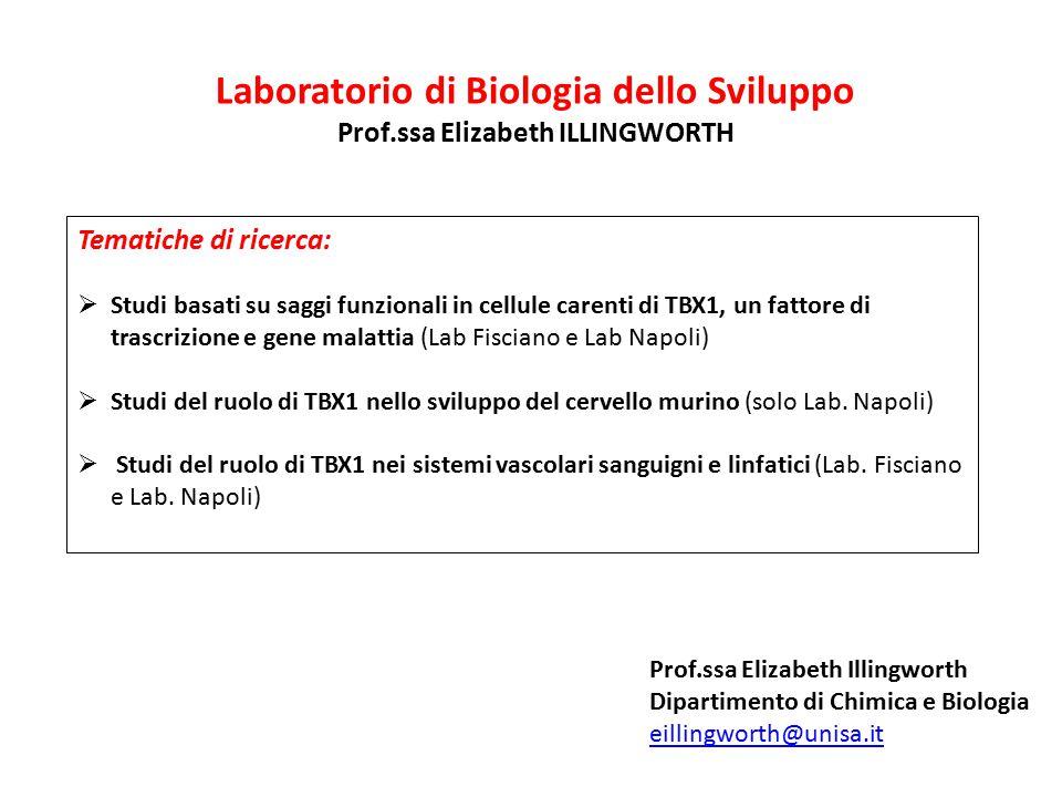 Laboratorio di Biologia dello Sviluppo Prof.ssa Elizabeth ILLINGWORTH Tematiche di ricerca:  Studi basati su saggi funzionali in cellule carenti di T