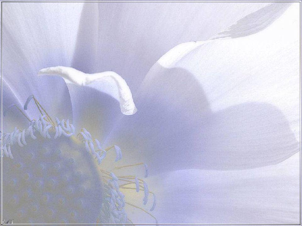 Ha bisogno che voi vi sediate in terra vicino a Lei e che aspettiate che il suo cuore calmi il battito che la paura scompaia che tutto il mondo riprenda a girare tranquillo e sarà sempre Lei ad alzarsi per prima e a darvi la mano per tirarvi su in modo da avvicinarvi al cielo