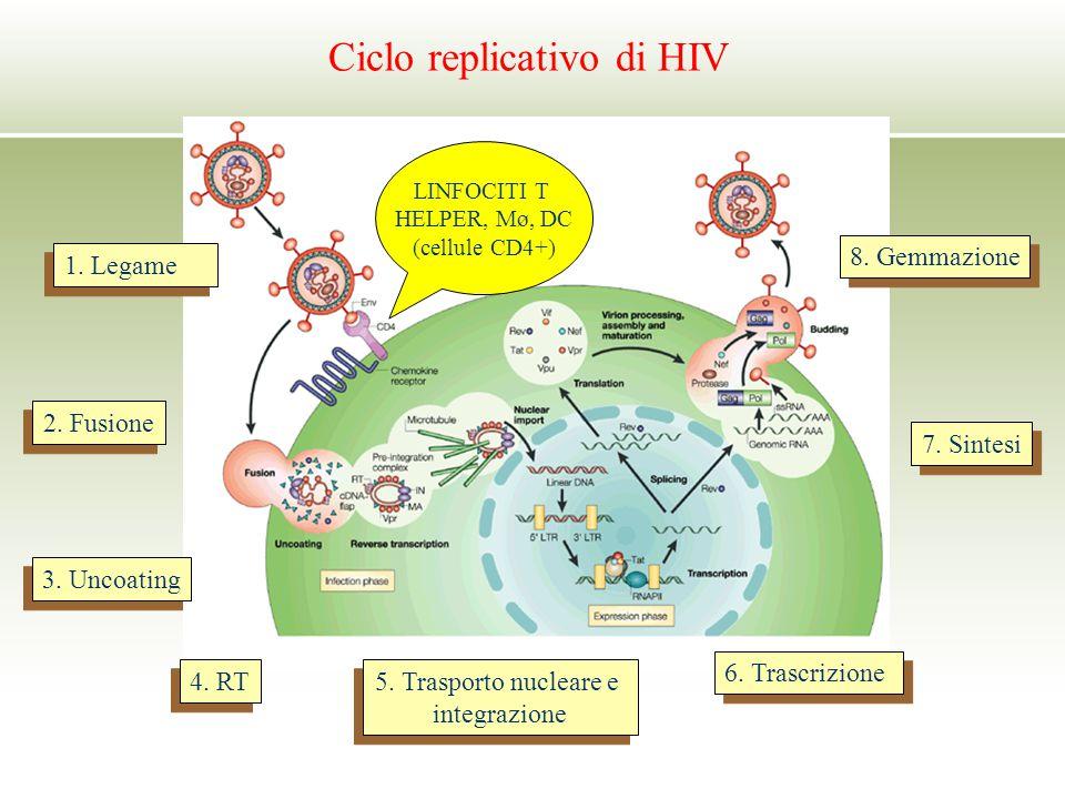 Ciclo replicativo di HIV 1. Legame 2. Fusione 3. Uncoating 4. RT 5. Trasporto nucleare e integrazione 5. Trasporto nucleare e integrazione 6. Trascriz