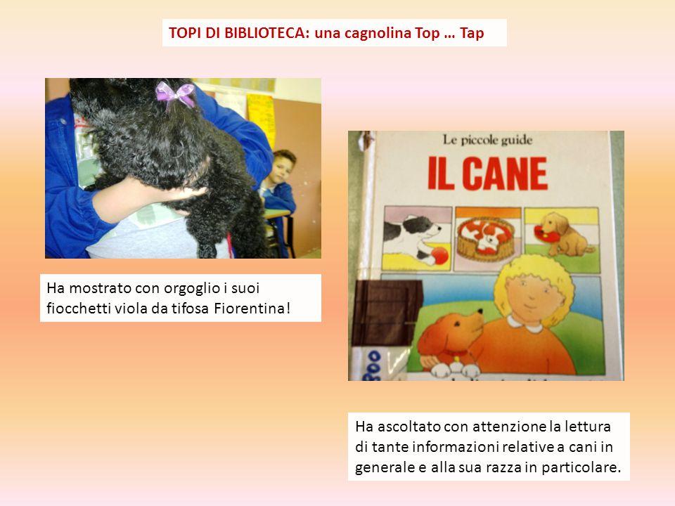TOPI DI BIBLIOTECA: una cagnolina Top … Tap Ha mostrato con orgoglio i suoi fiocchetti viola da tifosa Fiorentina.