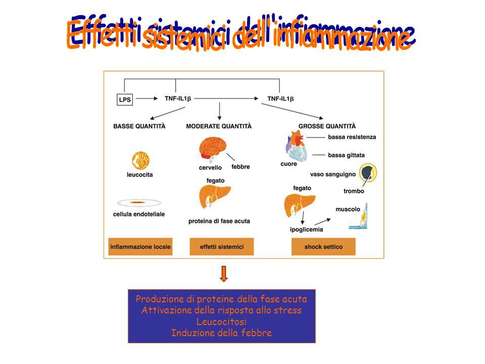 Produzione di proteine della fase acuta Attivazione della risposta allo stress Leucocitosi Induzione della febbre