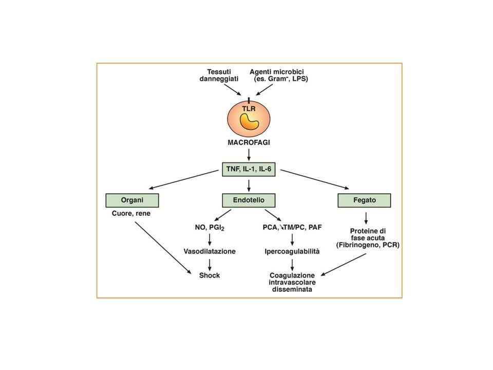 Strutture microbiche che interagiscono con il sistema immune innato vengono denominate PATHOGEN-ASSOCIATED MOLECULAR PATTERNS- PAMP S.