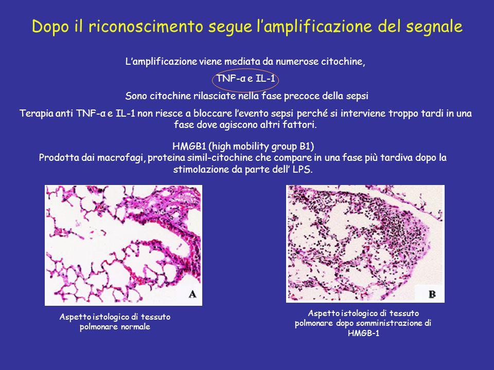 Dopo il riconoscimento segue l'amplificazione del segnale HMGB1 (high mobility group B1) Prodotta dai macrofagi, proteina simil-citochine che compare