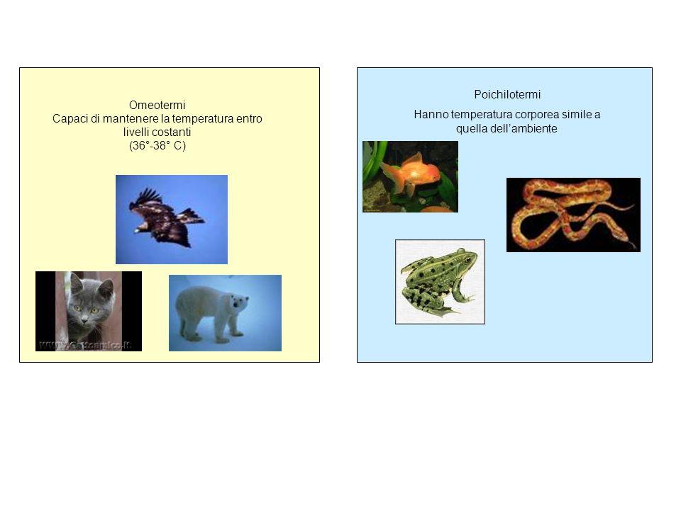 Omeotermi Capaci di mantenere la temperatura entro livelli costanti (36°-38° C) Poichilotermi Hanno temperatura corporea simile a quella dell'ambiente
