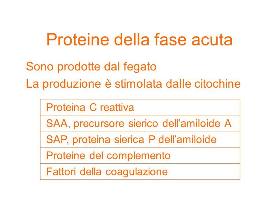 Proteine della fase acuta Sono prodotte dal fegato La produzione è stimolata dalle citochine Proteina C reattiva SAA, precursore sierico dell'amiloide