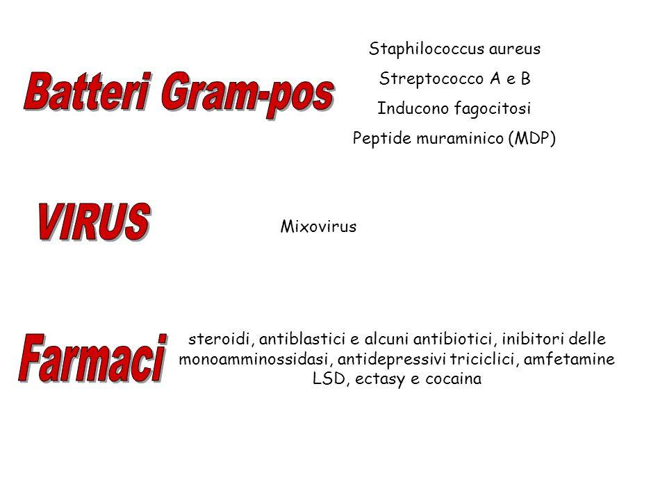 Staphilococcus aureus Streptococco A e B Inducono fagocitosi Peptide muraminico (MDP) Mixovirus steroidi, antiblastici e alcuni antibiotici, inibitori