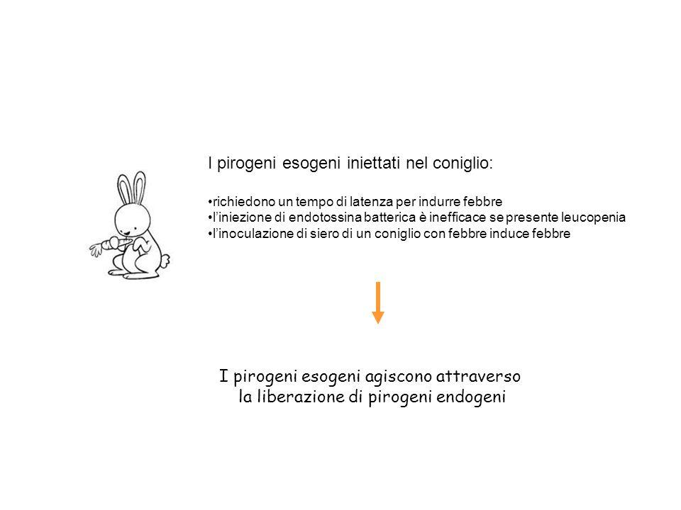 I pirogeni esogeni iniettati nel coniglio: richiedono un tempo di latenza per indurre febbre l'iniezione di endotossina batterica è inefficace se pres