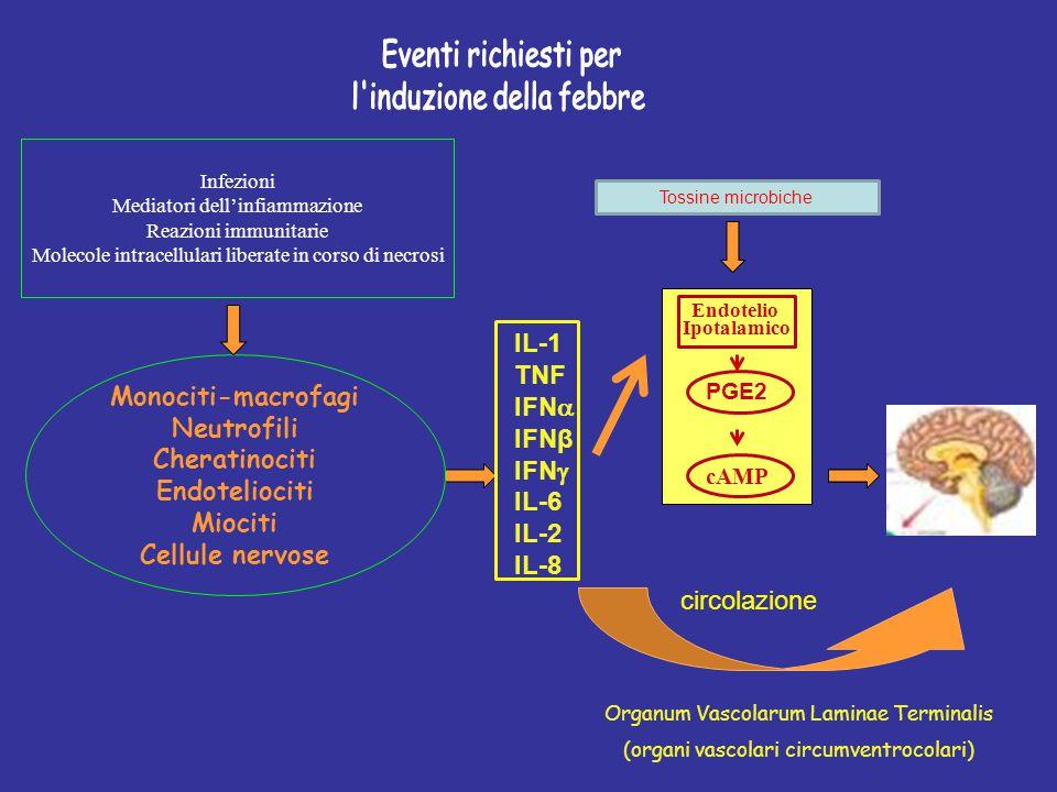 IL-1 TNF IFN  IFNβ IFN  IL-6 IL-2 IL-8 Endotelio Ipotalamico PGE2 cAMP Organum Vascolarum Laminae Terminalis (organi vascolari circumventrocolari) I