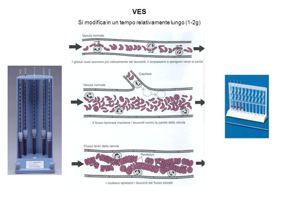 VES Si modifica in un tempo relativamente lungo (1-2g)