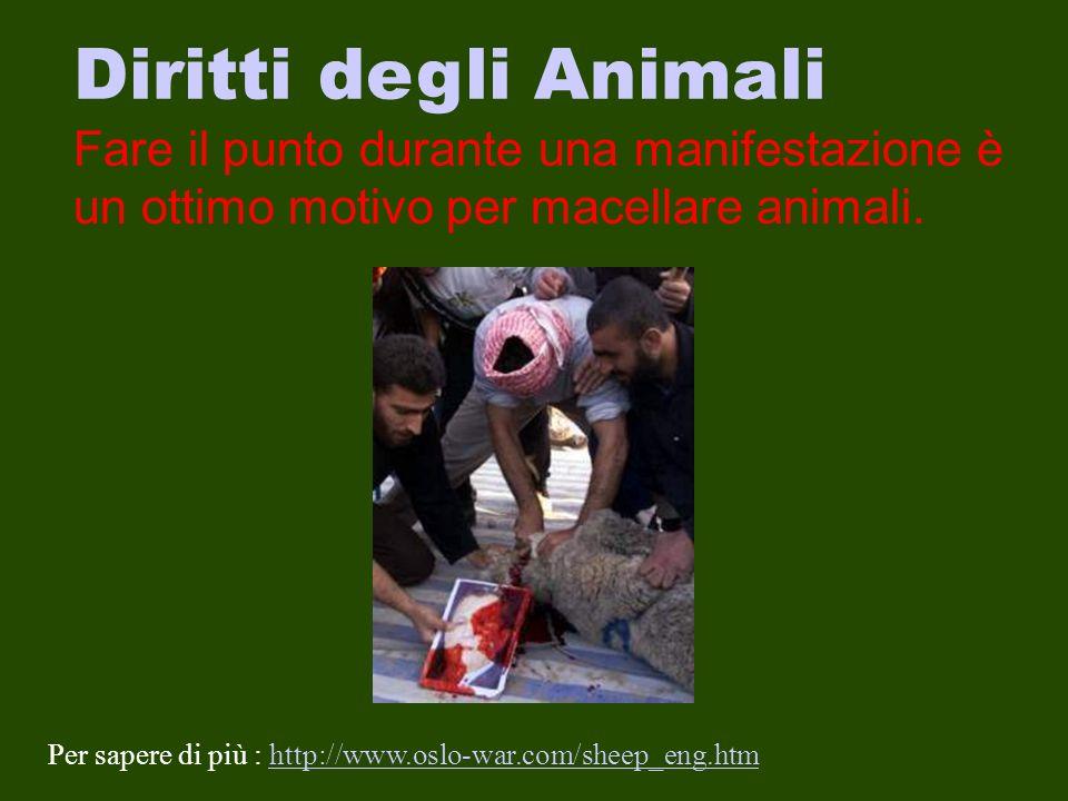 Diritti degli Animali Fare il punto durante una manifestazione è un ottimo motivo per macellare animali.
