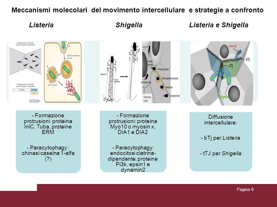 Pagina 7 Riassumendo …… Listeria monocytogenes, Shigella flexneri e Rickettsia spp.