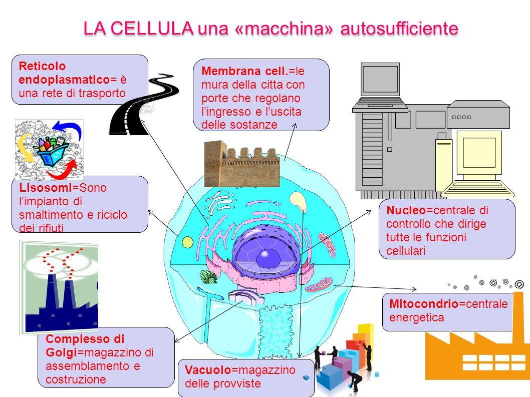 LA CELLULA una «macchina» autosufficiente Mitocondrio=centrale energetica Nucleo=centrale di controllo che dirige tutte le funzioni cellulari Membrana