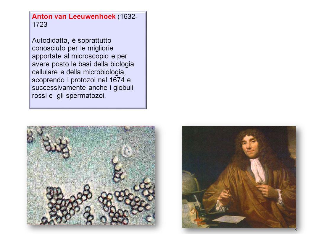 3 Anton van Leeuwenhoek (1632- 1723 Autodidatta, è soprattutto conosciuto per le migliorie apportate al microscopio e per avere posto le basi della bi