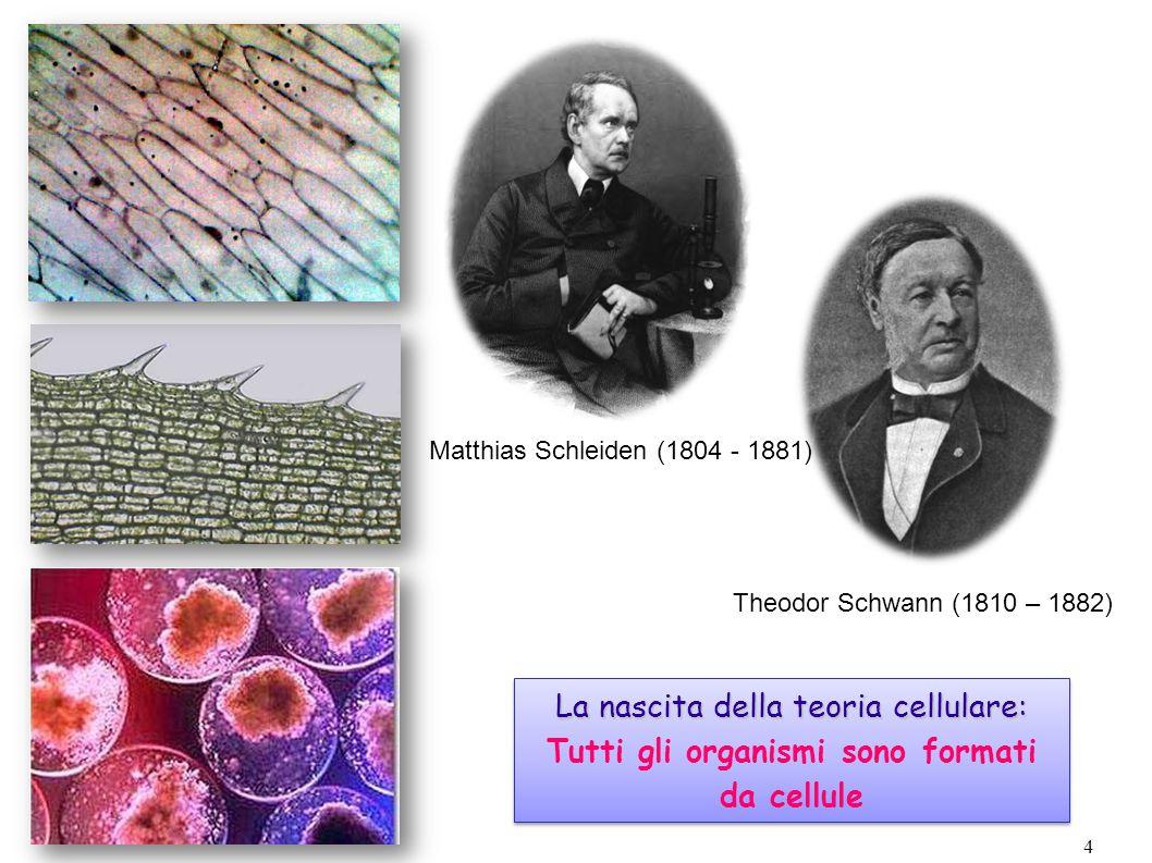 4 Matthias Schleiden (1804 - 1881) Theodor Schwann (1810 – 1882) La nascita della teoria cellulare: La nascita della teoria cellulare: Tutti gli orga
