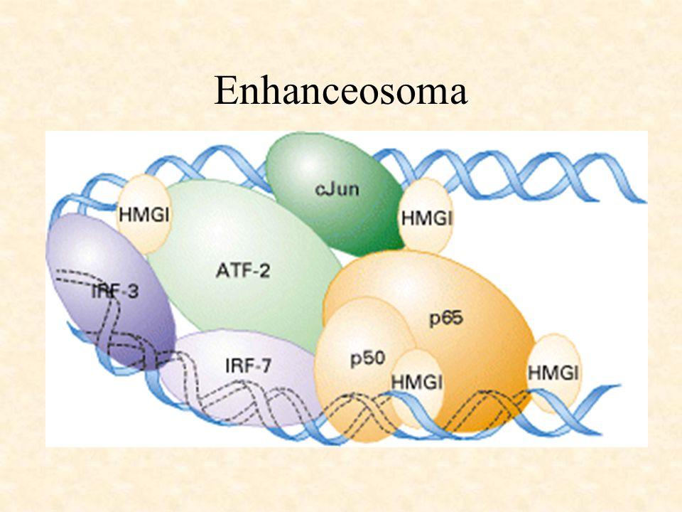 Enhanceosoma
