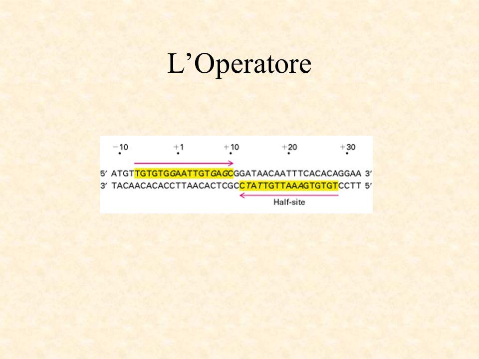 L'Operatore