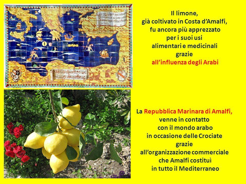 Il limone, già coltivato in Costa d'Amalfi, fu ancora più apprezzato per i suoi usi alimentari e medicinali grazie all'influenza degli Arabi La Repubb