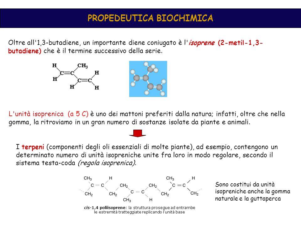 cis-1,4 poliisoprene: la struttura prosegue ad entrambe le estremità tratteggiate replicando l unità base PROPEDEUTICA BIOCHIMICA Oltre all 1,3-butadiene, un importante diene coniugato è l isoprene (2-metil-1,3- butadiene) che è il termine successivo della serie.
