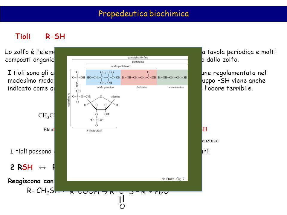 Propedeutica biochimica Tioli R-SH Lo zolfo è l ' elemento che si trova esattamente sotto l ' ossigeno nella tavola periodica e molti composti organici hanno i il loro analogo in cui l ' ossigeno è sostituito dallo zolfo.