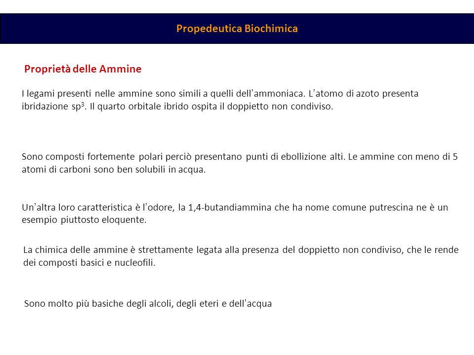 Propedeutica Biochimica Proprietà delle Ammine I legami presenti nelle ammine sono simili a quelli dell ' ammoniaca.