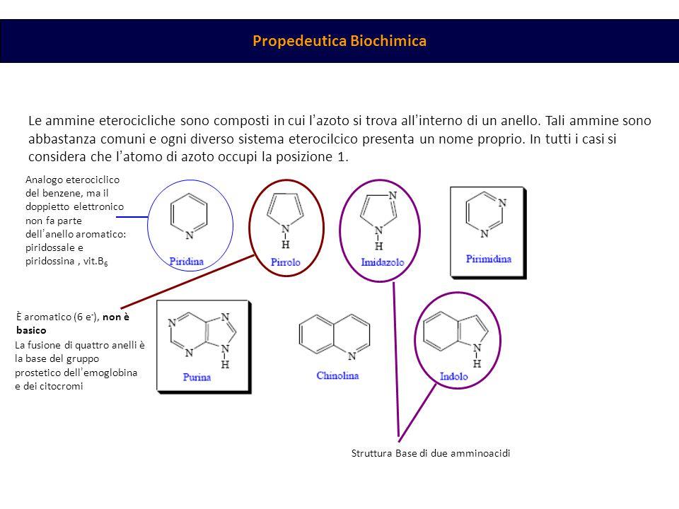 Propedeutica Biochimica Le ammine eterocicliche sono composti in cui l ' azoto si trova all ' interno di un anello. Tali ammine sono abbastanza comuni