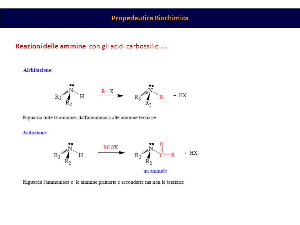 Propedeutica Biochimica Reazioni delle ammine con gli acidi carbossilici….