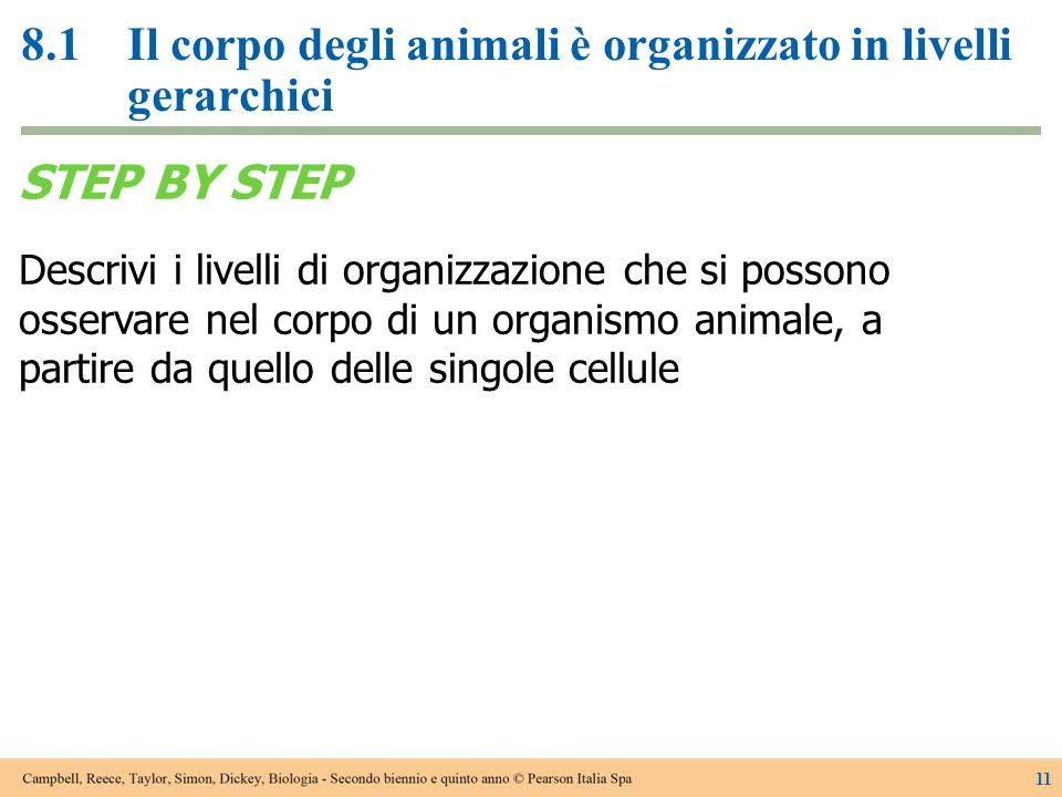 8.1Il corpo degli animali è organizzato in livelli gerarchici 11 STEP BY STEP Descrivi i livelli di organizzazione che si possono osservare nel corpo