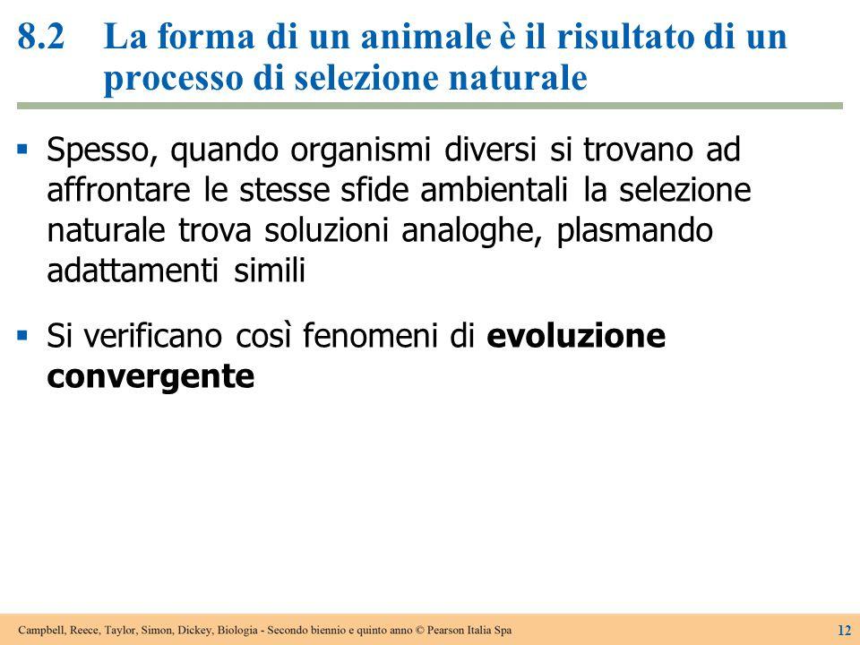 8.2La forma di un animale è il risultato di un processo di selezione naturale  Spesso, quando organismi diversi si trovano ad affrontare le stesse sf