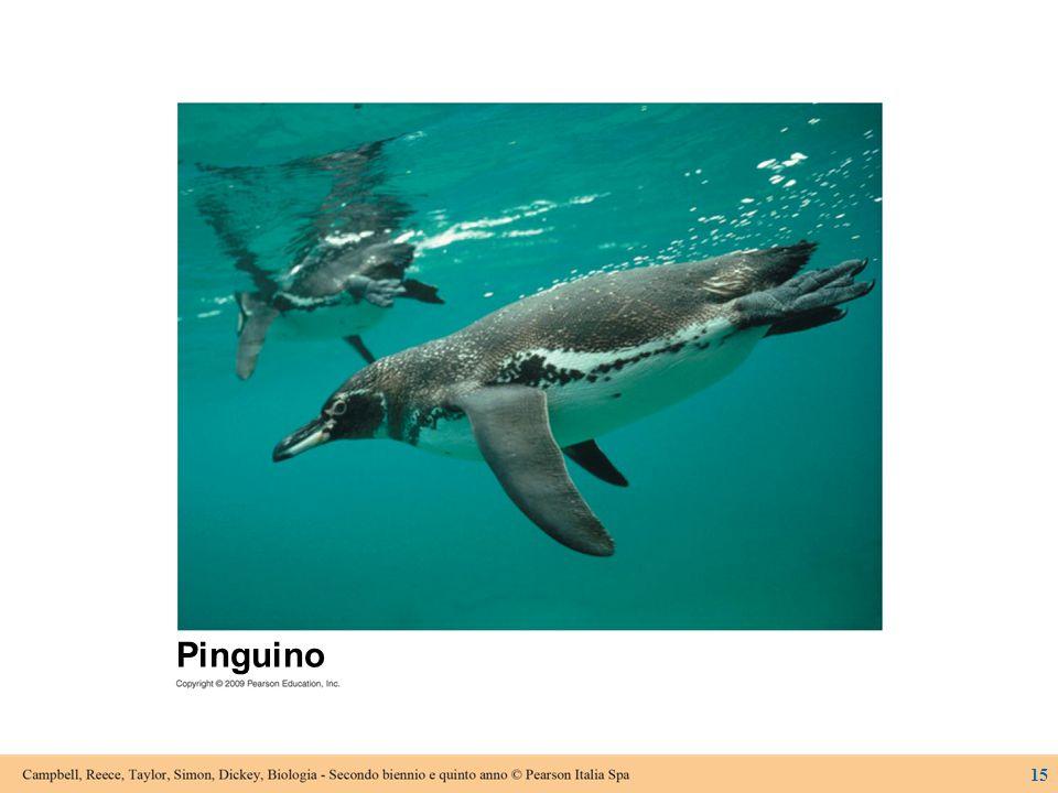 15 Pinguino