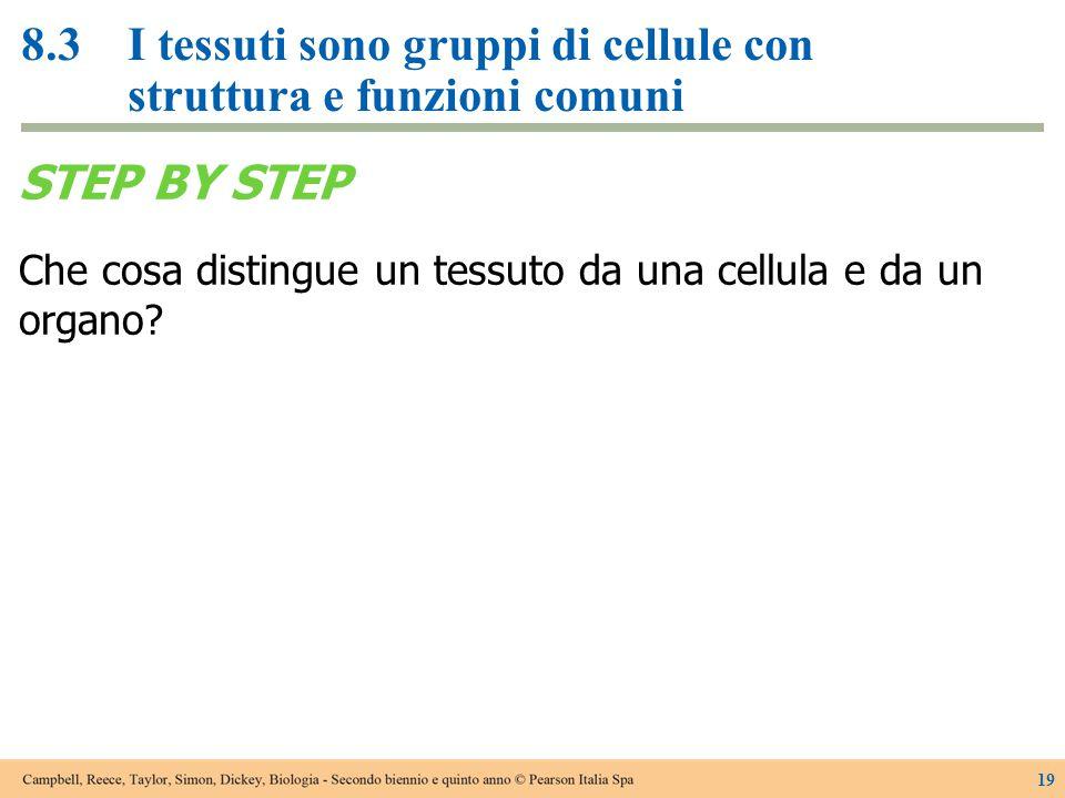 8.3I tessuti sono gruppi di cellule con struttura e funzioni comuni 19 STEP BY STEP Che cosa distingue un tessuto da una cellula e da un organo?