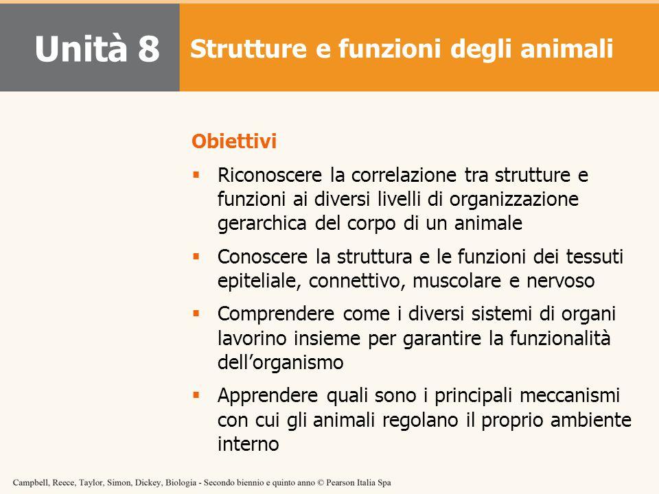 Obiettivi  Riconoscere la correlazione tra strutture e funzioni ai diversi livelli di organizzazione gerarchica del corpo di un animale  Conoscere l