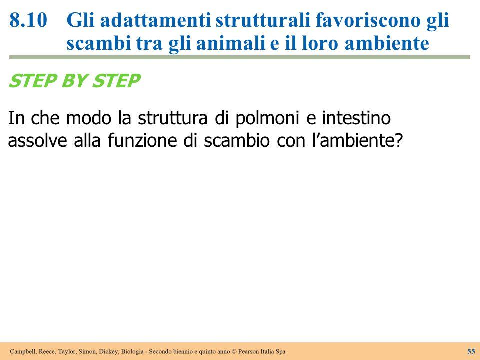 8.10Gli adattamenti strutturali favoriscono gli scambi tra gli animali e il loro ambiente STEP BY STEP In che modo la struttura di polmoni e intestino