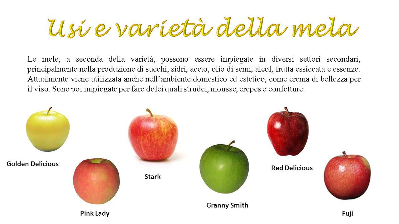 Golden Delicious Pink Lady Stark Granny Smith Red Delicious Fuji Le mele, a seconda della varietà, possono essere impiegate in diversi settori seconda
