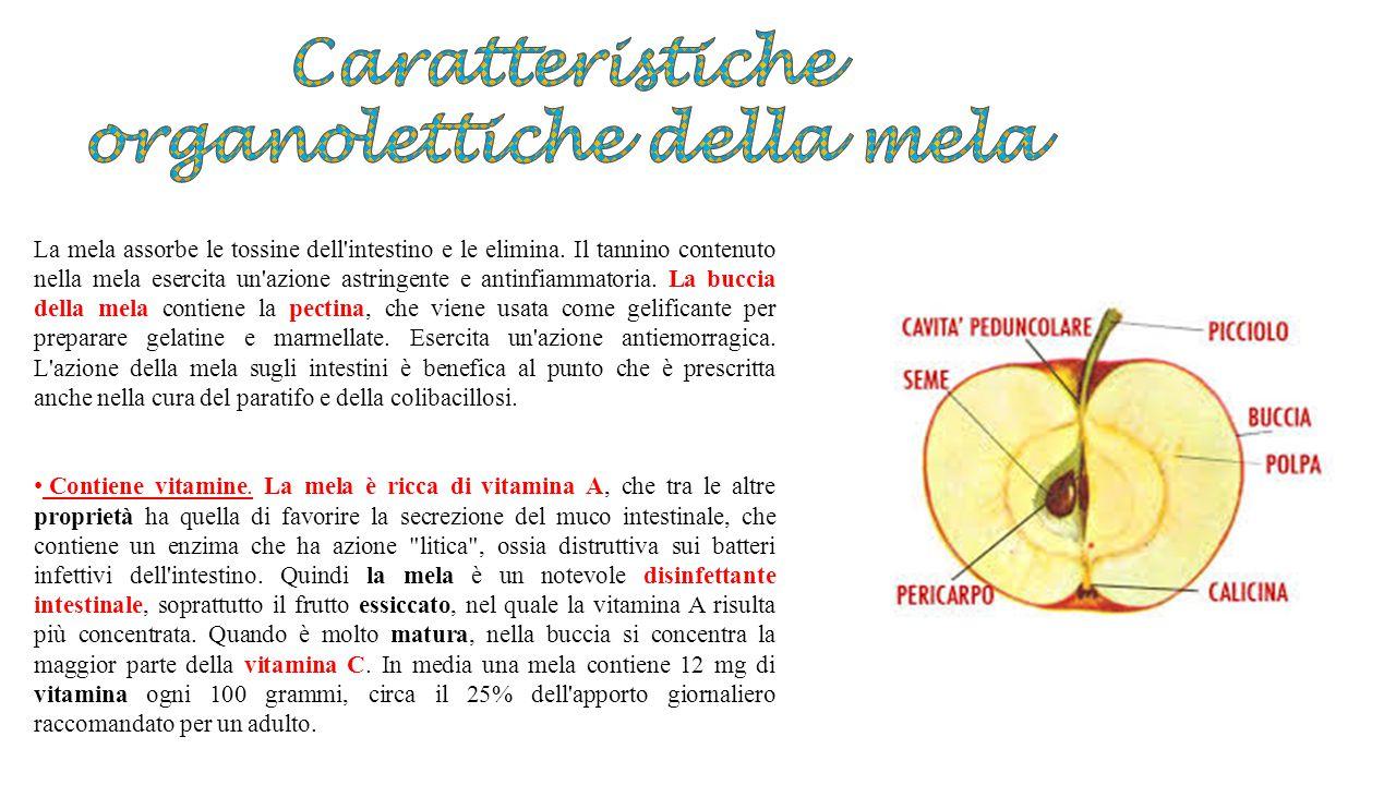 La mela assorbe le tossine dell'intestino e le elimina. Il tannino contenuto nella mela esercita un'azione astringente e antinfiammatoria. La buccia d
