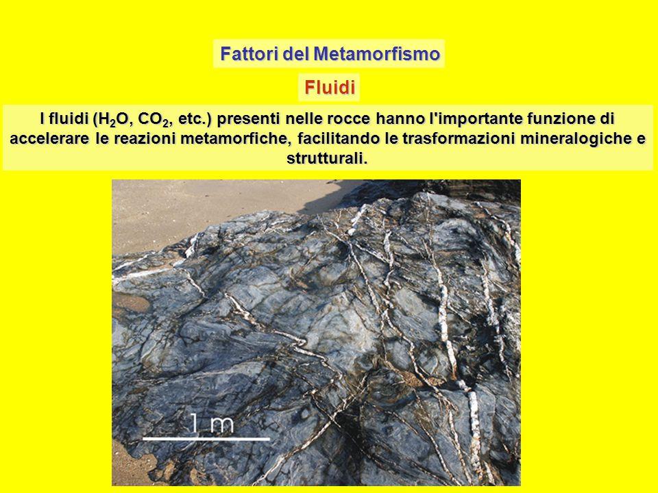 Fattori del Metamorfismo Fluidi I fluidi (H 2 O, CO 2, etc.) presenti nelle rocce hanno l'importante funzione di accelerare le reazioni metamorfiche,