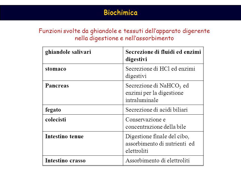 Biochimica Funzioni svolte da ghiandole e tessuti dell'apparato digerente nella digestione e nell'assorbimento