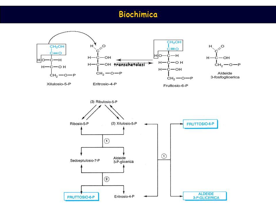 Biochimica transchetolasi