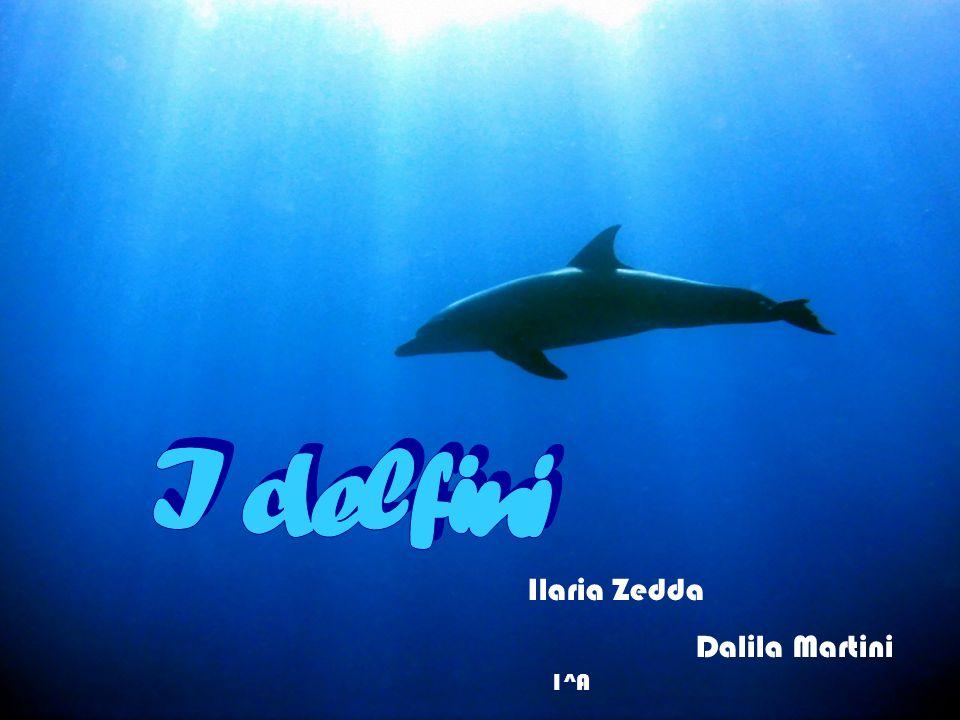 Ilaria Zedda Dalila Martini 1^A