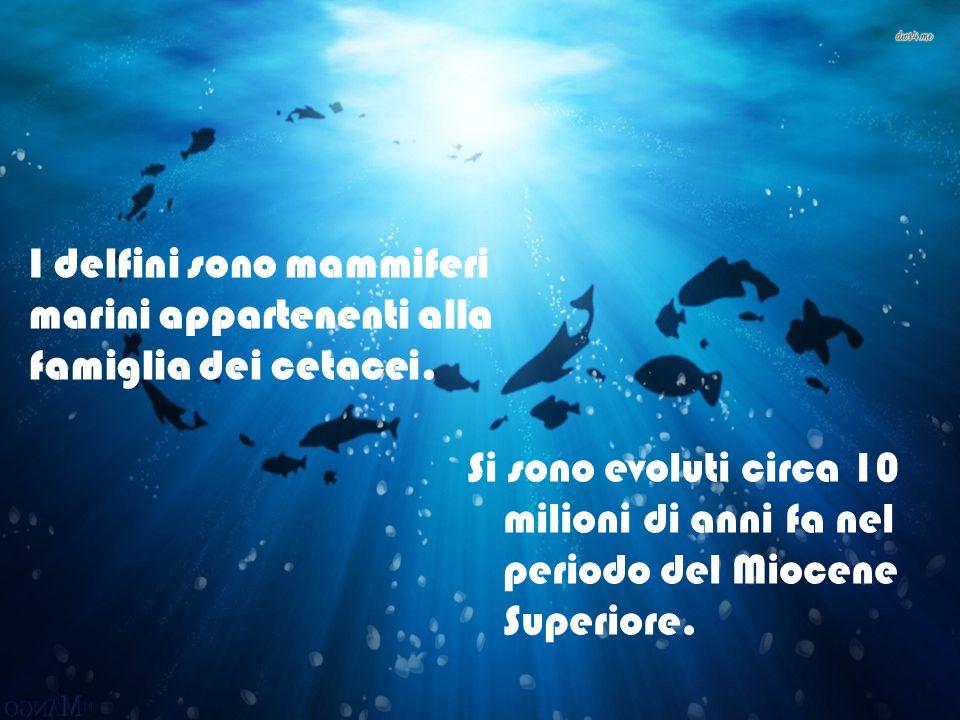 Si sono evoluti circa 10 milioni di anni fa nel periodo del Miocene Superiore. I delfini sono mammiferi marini appartenenti alla famiglia dei cetacei.