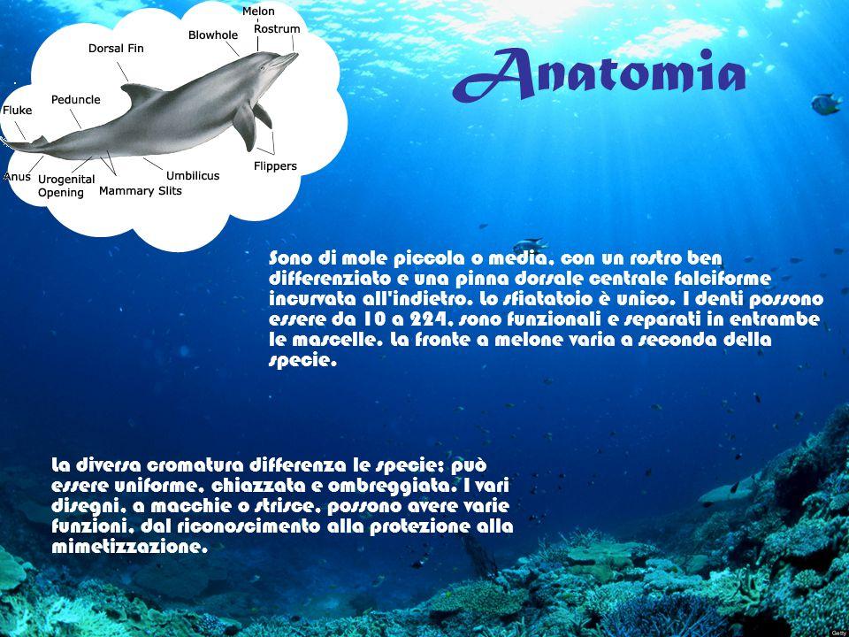 Anatomia La diversa cromatura differenza le specie; può essere uniforme, chiazzata e ombreggiata. I vari disegni, a macchie o strisce, possono avere v