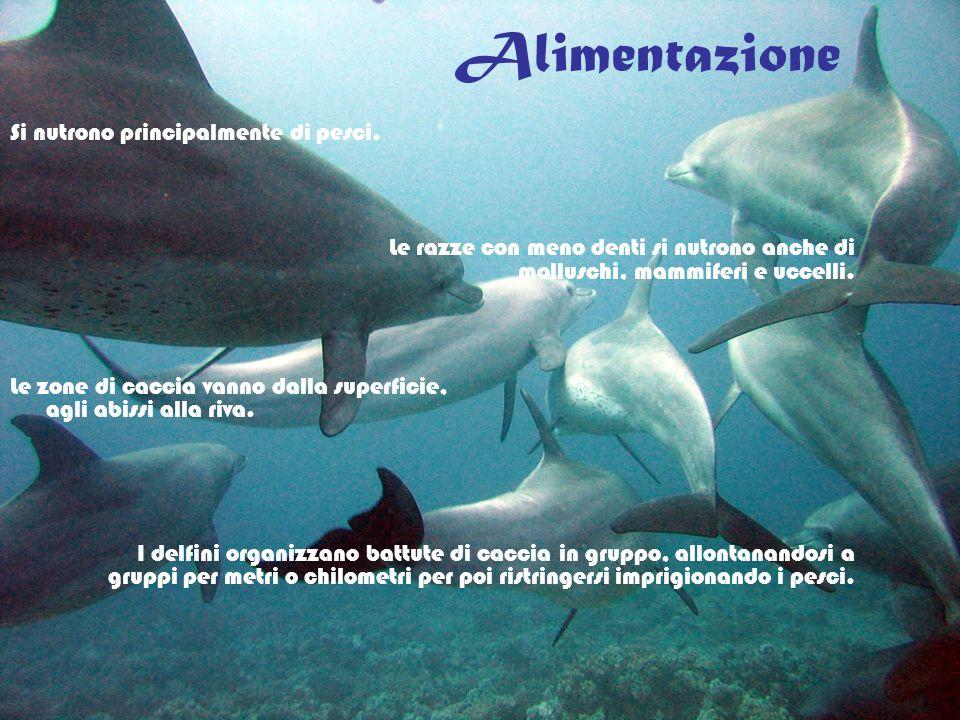 Alimentazione Si nutrono principalmente di pesci. Le razze con meno denti si nutrono anche di molluschi, mammiferi e uccelli. Le zone di caccia vanno