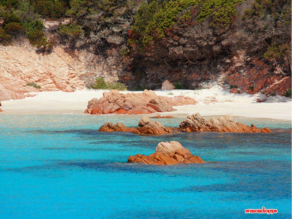 Alla fine della vita degli organismi, i gusci cadono sul fondale e vengono trasportati sulla spiaggia.