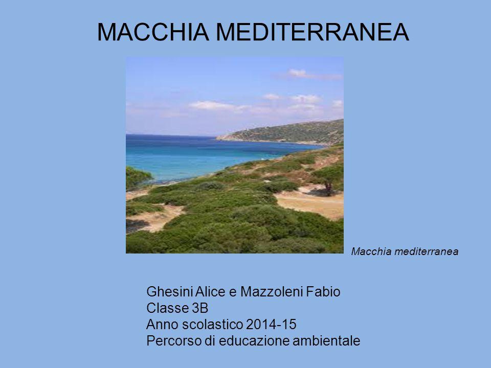 MACCHIA MEDITERRANEA Ghesini Alice e Mazzoleni Fabio Classe 3B Anno scolastico 2014-15 Percorso di educazione ambientale Macchia mediterranea