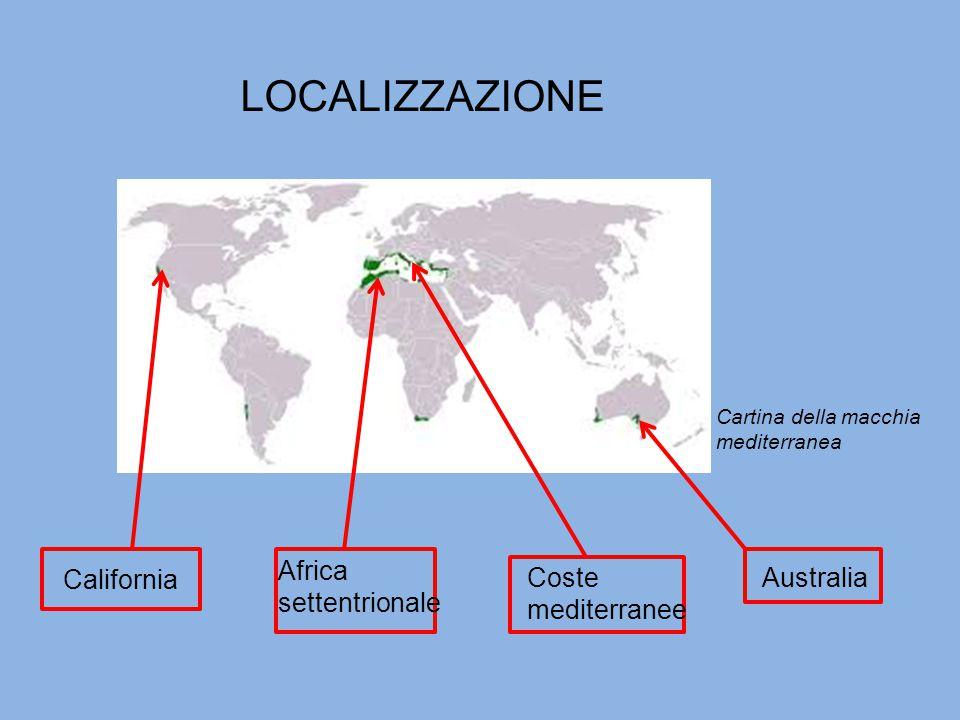 LOCALIZZAZIONE AustraliaCoste mediterranee Africa settentrionale California Cartina della macchia mediterranea